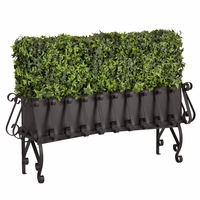 Ivy Hedges in Elevated European Planters