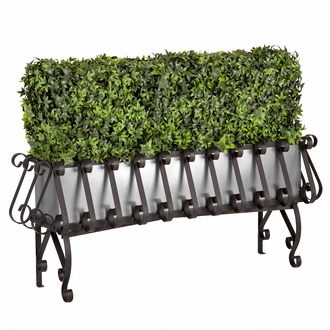 Ivy Hedge in Metal-Lined European Iron Planter