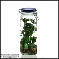 11in. Jade Plant in Glass Jar with Lid