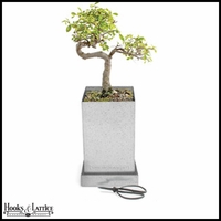 Japanese Elm Bonsai Box