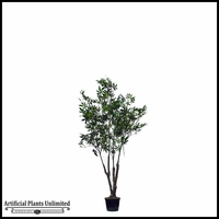 Japanese Maple Tree (2 Sizes, Colors)