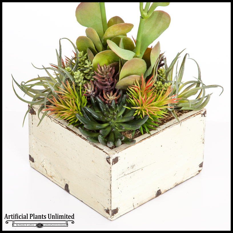 Kalanchoe cactus mix in rustic white wood planter 10 for Wooden cactus planter