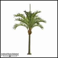 13' or 15' Large King Palm