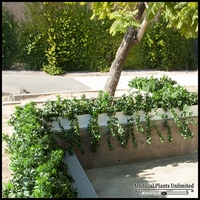 Large Scale Window Box Planting