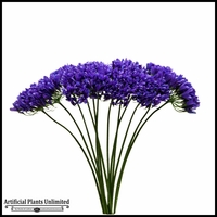 Lily of the Nile, Agapanthus with Full Sized Stems - Set of 12
