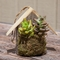 Live Succulent in Birdhouse Container