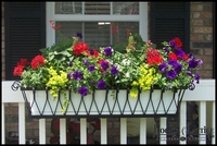 Lynda Duggan's Del Mar Decora Window Box
