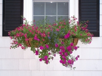 Michele Wuschner's Hayrack Trough Window Planters