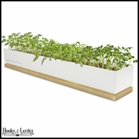 Micro-greens Grow Box - Spices