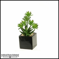 11in. Mini Dracaena and Aloe in Square Ceramic Planter