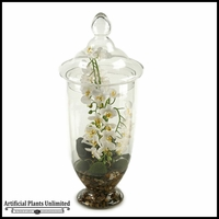 23in. Mini White Phael Orchids in Apothecary Jar with Lid