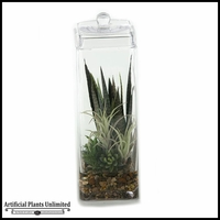 18in. Mixed Agave and Tillandsia in Glass Jar with Lid