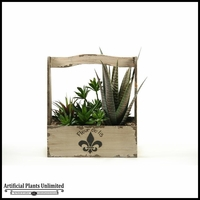 14in. Mixed Agave Succulents and Echeveria in Fleur De Lis Planter with Handle