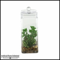 12in. Mixed Sedum and Jade Plants in Glass Jar with Lid