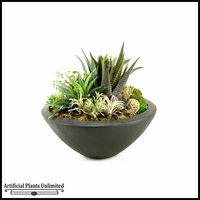Mixed Succulents in Large Resin Bowl, 23 in.