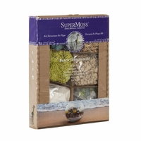 Moss Beach Terrarium Kit - Small