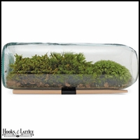 Moss Terrarium Bottle Kit