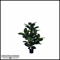 3', 4', 6' or 8' Multi Trunk Rubber Plant