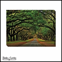 Oak Tree Tunnel Road - Canvas Artwork