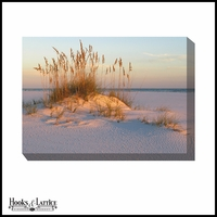Oats on the East Coast Beach - Canvas Artwork