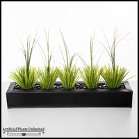 3' Onion Grass in Tray
