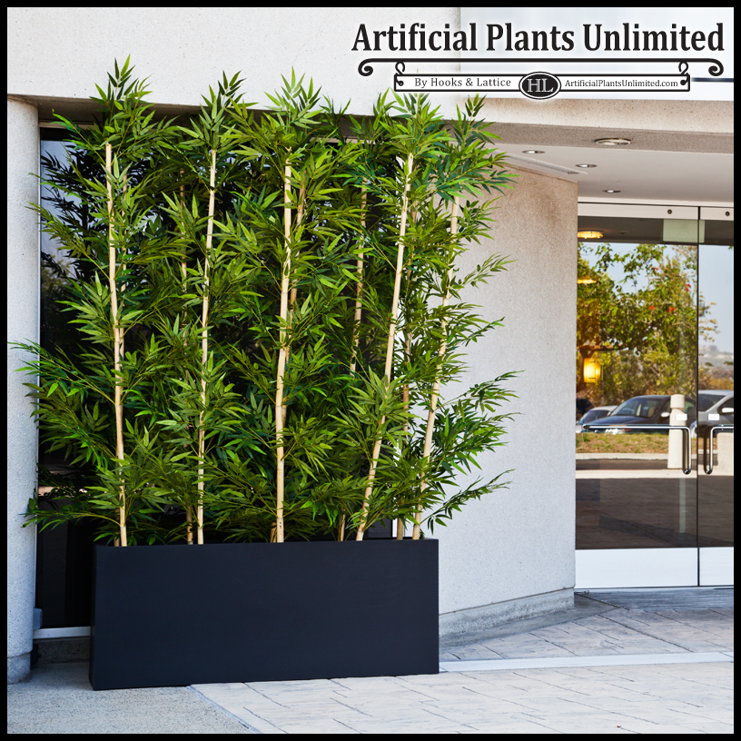 Bamboo Plants For Privacy Screen 2017 2018 Best Cars