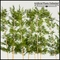 8'L Bamboo Artificial Indoor Grove- Three Heights Available!