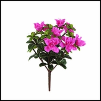 14in. Tall Pink Azalea Bush
