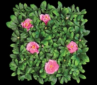 12in. X 12in. Pink Flowering Azalea Mat - Artificial Outdoor