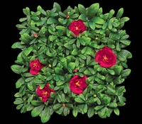 12in. X 12in. Red Azalea Mat- Artificial Outdoor