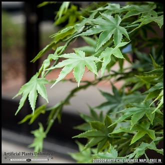 6' Japanese Maple Tree, Outdoor Rated