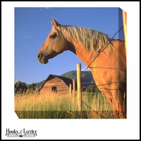 Palomino Horse at Sunrise - Canvas Artwork