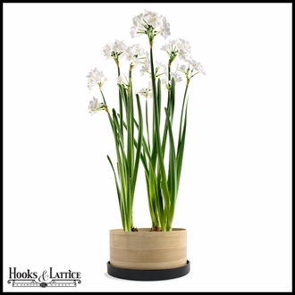 Paperwhite Bulb Bamboo Grow Container