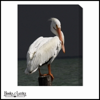 Perching Pelican - Canvas Artwork