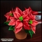 Poinsettia Mounted in Terracotta Pot