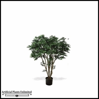 4' or 6' Potted Black Willow Tree