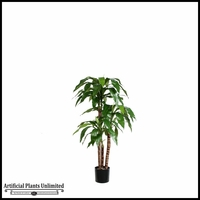 3.5' or 4.5' Potted Dracaena Fragrans Tree