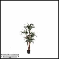 4' or 6' Potted Dracaena Warneckii Plant