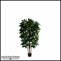 6', 7' or 8' Potted Giant Schefflera Tree