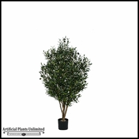 5' Potted Green Olive Tree w/ Olives