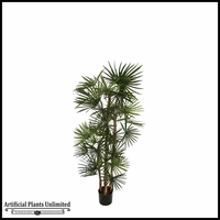 4', 5', 6', 8' or 9' Potted Lady Finger Palm