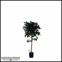 3.5' or 5.5' Potted Orange Tree