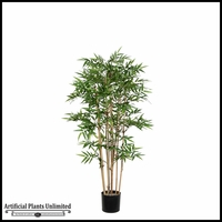 3', 4' or 5' Potted Oriental Bamboo Tree