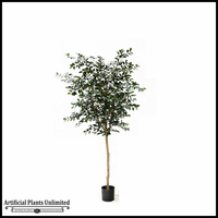 Potted Sazanka Tree 6'