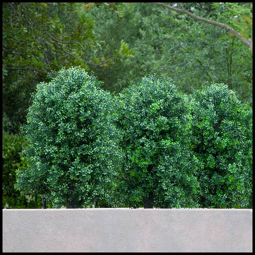 premium outdoor boxwood shrub artificial plants unlimited