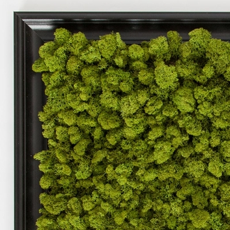 Preserved Lichen Moss Wall Art