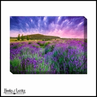 Purple Lavender Fields - Canvas Artwork