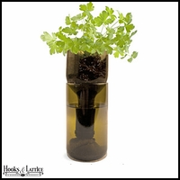 Recycled Bottle Seedling Kit - Growing Parsley