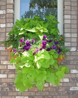Roxane's window boxes from Wisconsin