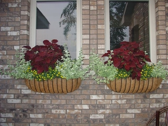 Roxane's XL Carolina Window Boxes